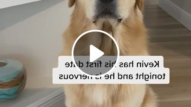 First Date For Kevin. I Think He Nailed It - Video & GIFs   golden retriever funny, retriever puppy, golden retriever baby, beautiful dogs, animals beautiful, cute animals, baby animals, funny animals, dogs golden retriever, baby golden retrievers, emotional support dog training