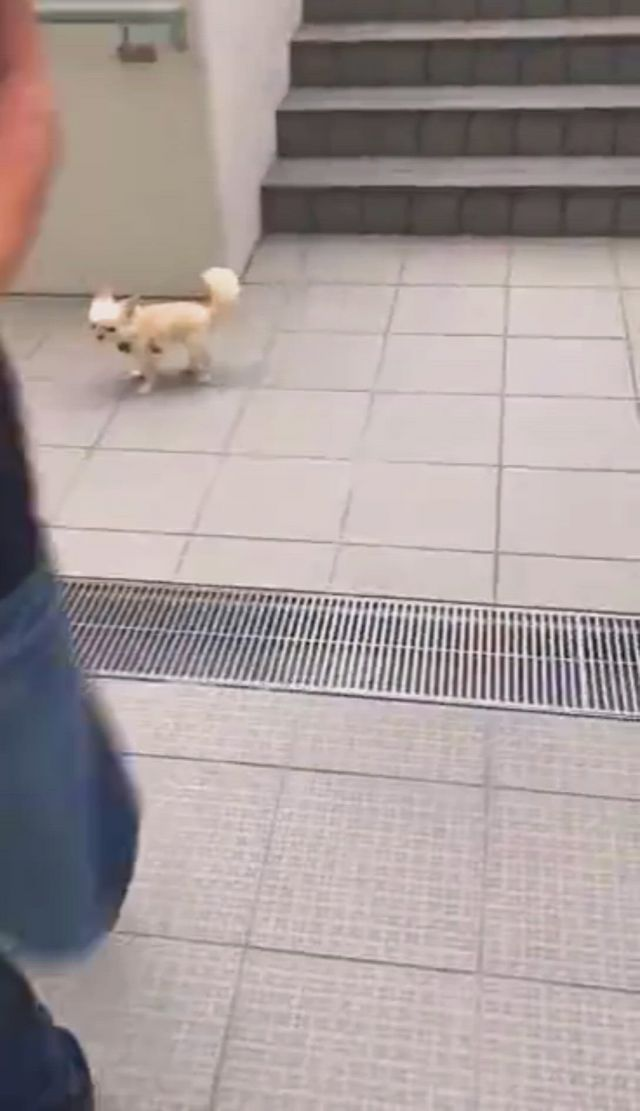He was afraid of going through the sewer