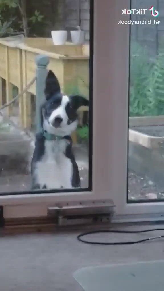 I'm cleaning the door - Video & GIFs | cute animals,cute funny animals,cute baby animals,funny dog memes,funny animal memes,funny animal videos,funny dogs,cute little animals,funny cute,hilarious,cute puppies