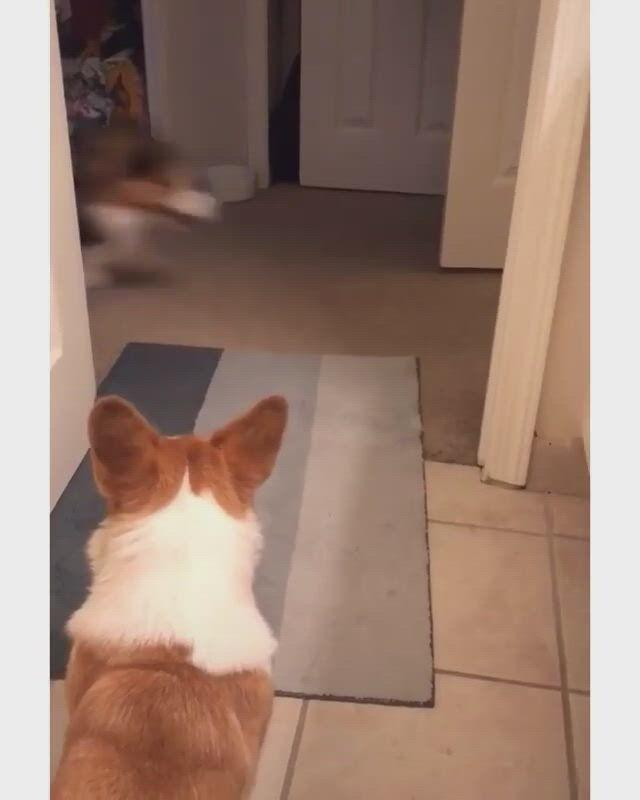 The fastest doggo alive