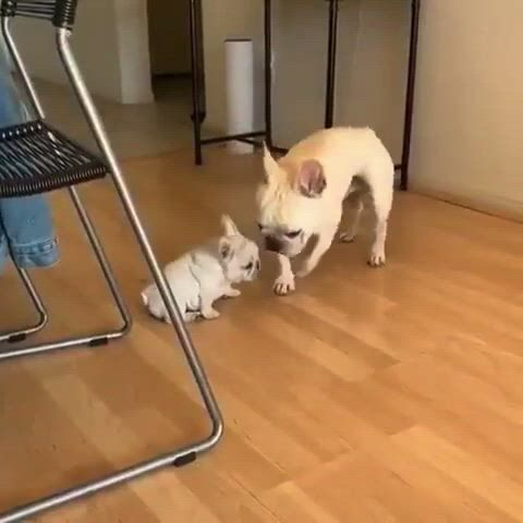 Mothers love - Video & GIFs   cute animals,funny animal videos,dogs,gifts for pet lovers,dog lovers,cute little animals,baby dogs,mothers love,dog harness,dog bed