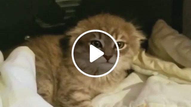 Ears Up - Video & GIFs   cute baby animals, cute animals, kittens cutest, cats and kittens, cute cats, funny cats, small animals, funny animals, beautiful creatures, animals beautiful