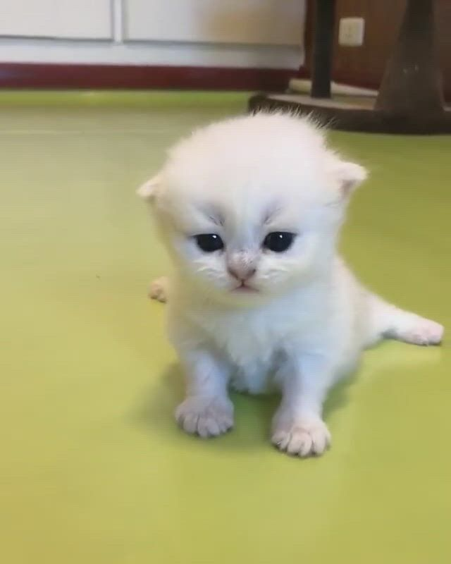 Say aww because I know you will!