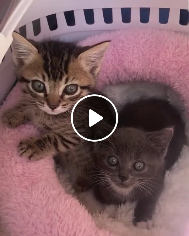 Seriously The Cutest Little Pediatric - Video & GIFs   kittens cutest, cute baby cats, cute baby animals, cute kitten pics, cute little animals, cute cats and kittens, cute dogs, pretty cats, beautiful cats, animals beautiful