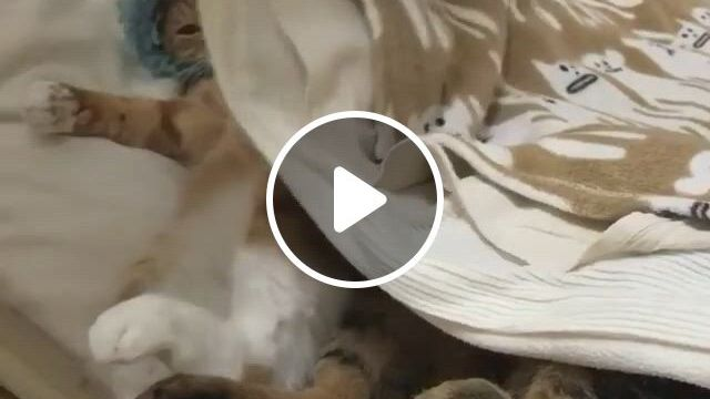 This Is The Party I Wanted - Video & GIFs | cute cats and dogs, cute baby animals, cute cats, cute animals, funny animal memes, funny animal videos, cute funny animals, animals and pets, funny cats, cute cats and kittens, i love cats, crazy cats