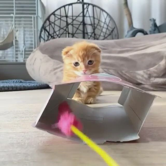 Try thinking outside the box - Video & GIFs   pretty cats,cute creatures,baby kittens,pretty kitty,cute cats,beautiful creatures,heart melting,personal space,cute animals