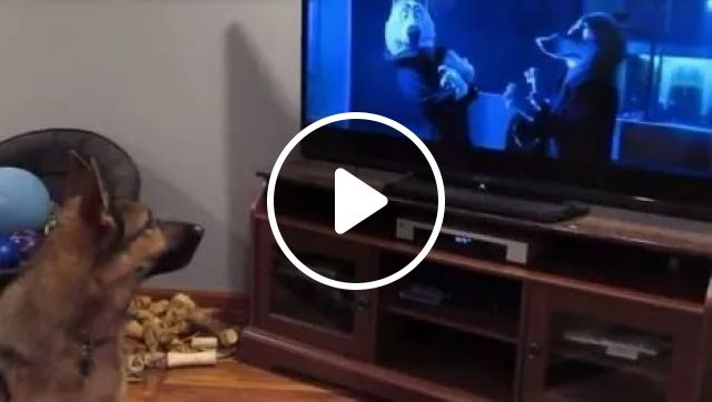 The call of the herd, lol, animals, German Shepherd, Dog Howling, Herd, Funny Dog, Cartoon, Television, Zootopia