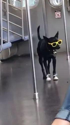 Stylish dog on the train