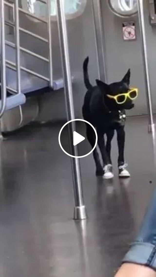 Stylish dog on the train, cute dog, train, Stylish, animals, fashion