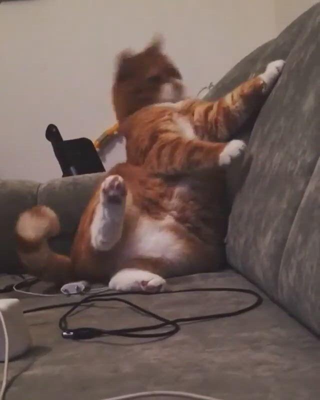 No no meow, human