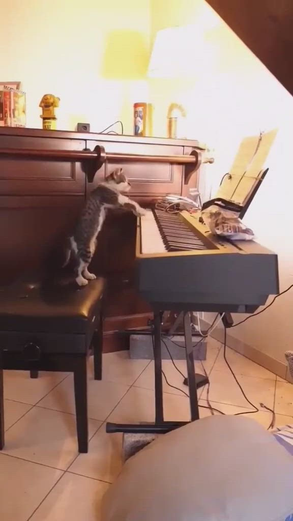 A cat is playing piano