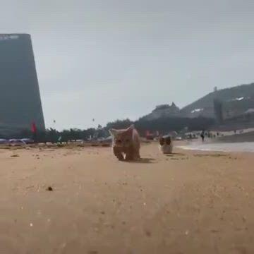 Cute kitty walking on the beach