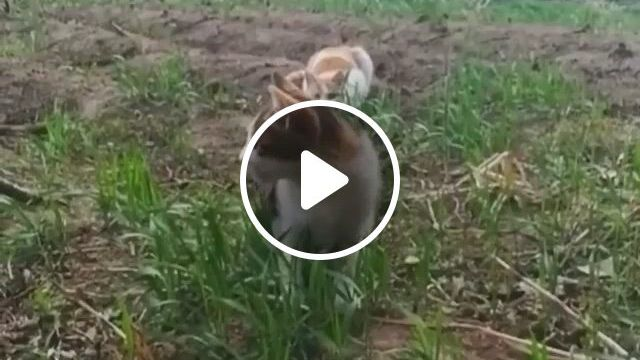 KungFu Cat - Video & GIFs | cute funny animals, animals, funny animals, funny animal videos, funny cute, cute cats, videos funny, gato gif, video humour