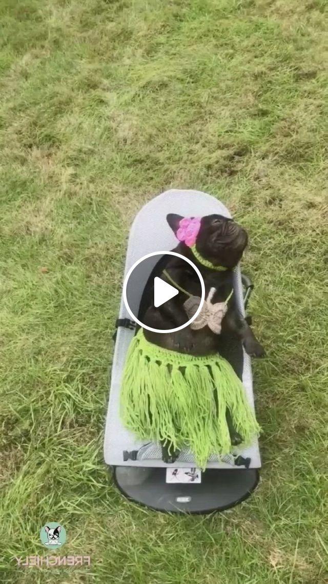 Best Dog Halloween Costume For Medium Dogs - Video & GIFs | dog halloween costumes, best dog halloween costumes, dog halloween, cute dogs and puppies, baby dogs, bulldog puppies, doggies, cute funny animals, cute baby animals, funny dogs, animals and pets