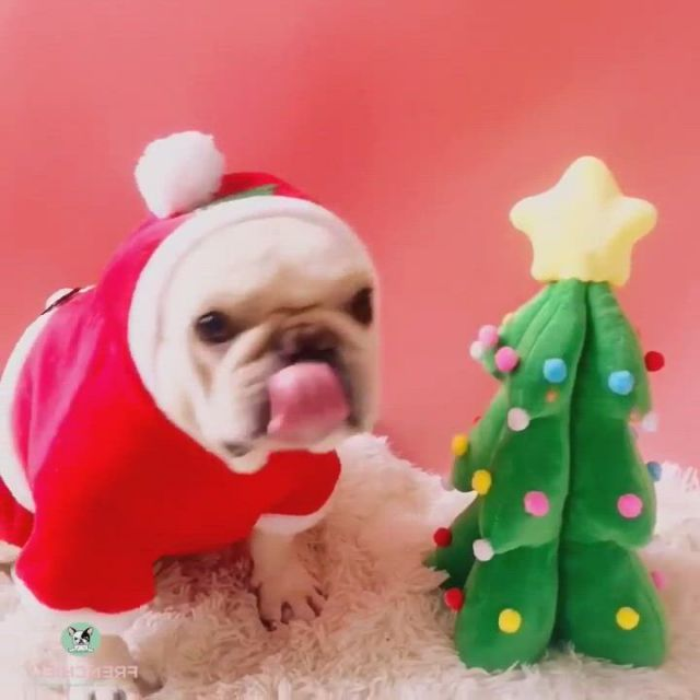 Best Dog Santa Clause Costume for Medium Dogs - Video & GIFs   christmas dog costume,dog and owner costumes,dog costumes funny,diy dog costumes,funny costumes,dog halloween costumes,cute dogs and puppies,baby dogs,doggies,cute funny animals,cute baby animals