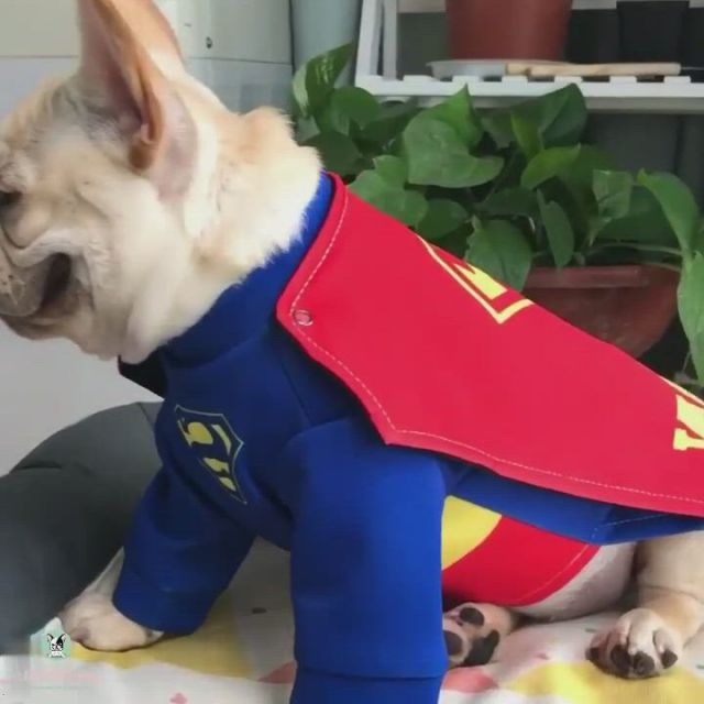 Best Frenchie Costume