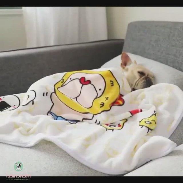 Cartoon French Bulldog Blanket - Video & GIFs | bulldog clothes,dog clothes,dog boots,french bulldog clothes,dog raincoat,medium dogs,dog dresses,more cute,winter sweaters,dog life,pugs