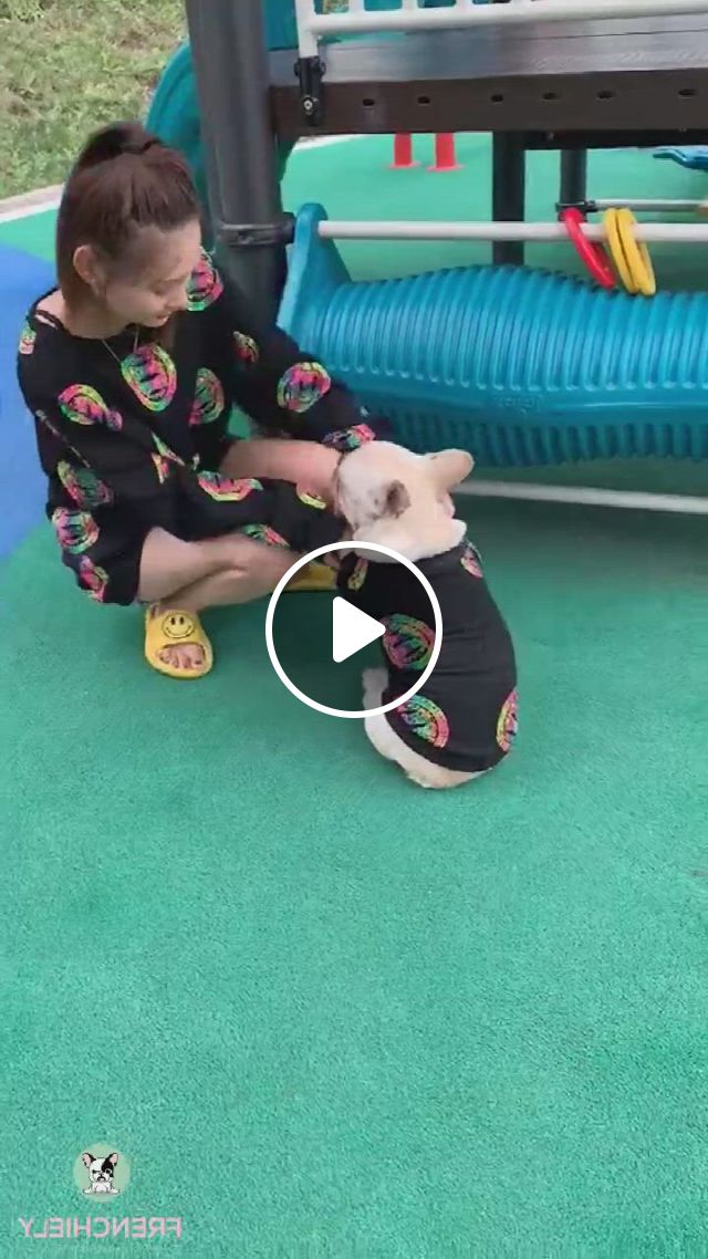 Pet And Owner Matching Clothes - Video & GIFs | matching clothes, matching outfits, bulldog products, french bulldog clothes, medium dogs, pug love, more cute, pugs, boston terrier