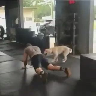 Awesome trainer - Video & GIFs   funny animal ,pets,funny animals,cute funny animals,dog quotes funny,funny dogs,cute dogs,animals and pets,baby animals