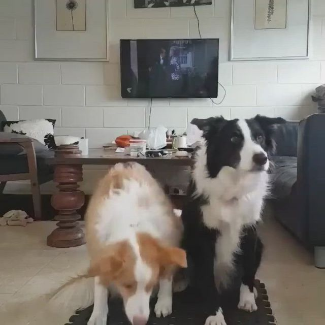 Family click time - Video & GIFs   dogs,pets,dog lovers,primates,tgif,funny husky meme,dog memes,funny dogs,cute baby animals,funny animals,dog breed info