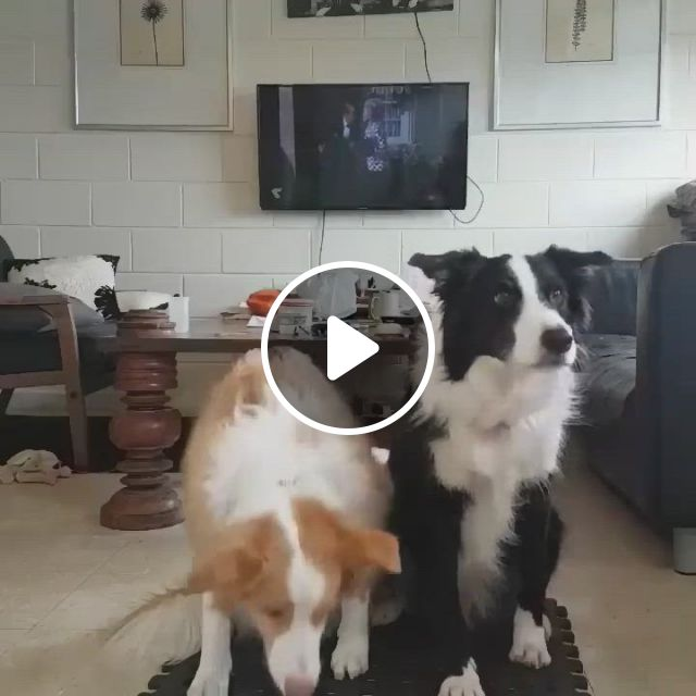 Family Click Time - Video & GIFs   dogs, pets, dog lovers, primates, tgif, funny husky meme, dog memes, funny dogs, cute baby animals, funny animals, dog breed info
