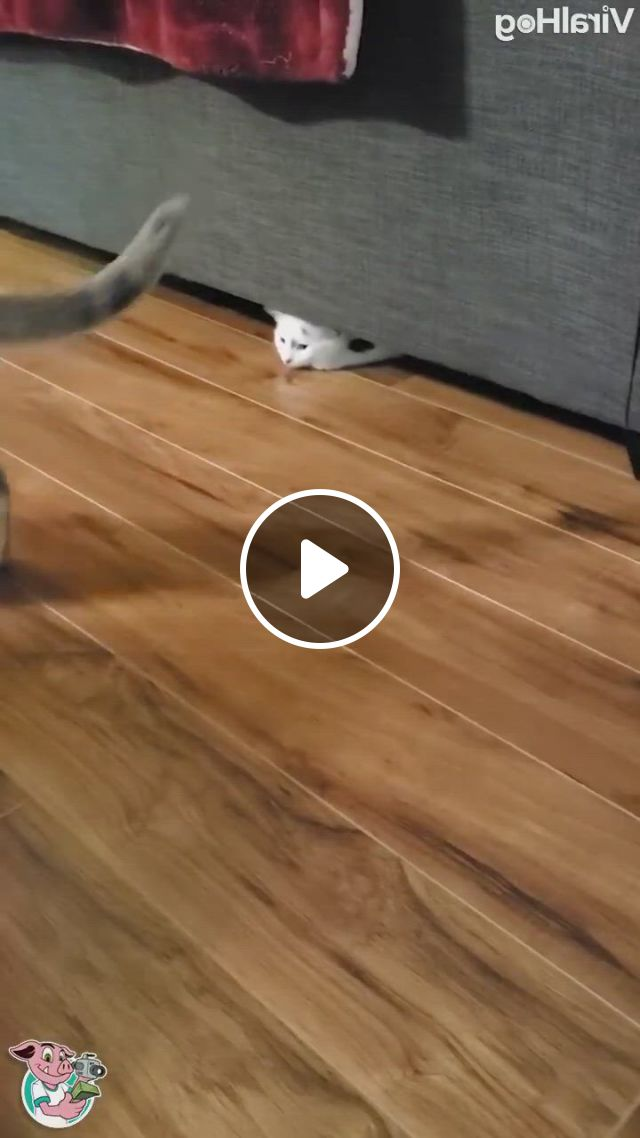 The Coolest Move I've Ever Seen - Video & GIFs | funny animal , cute baby animals, funny animals, cute baby cats, kittens cutest, all about animals, cat room, funny clips, cat furniture
