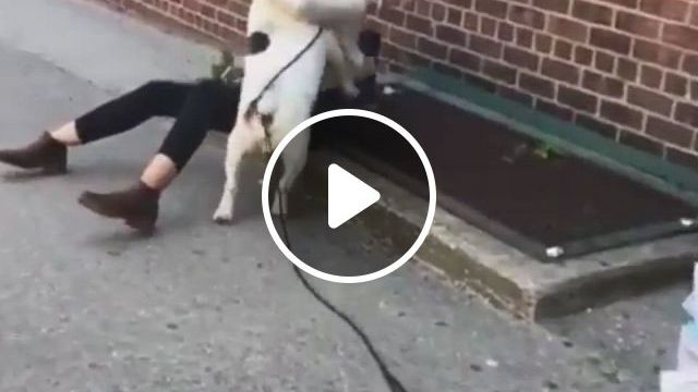 Puppy Love - Video & GIFs | this kind of love, puppy love, funny animals, shit happens, dogs, pet dogs, funny animal, doggies