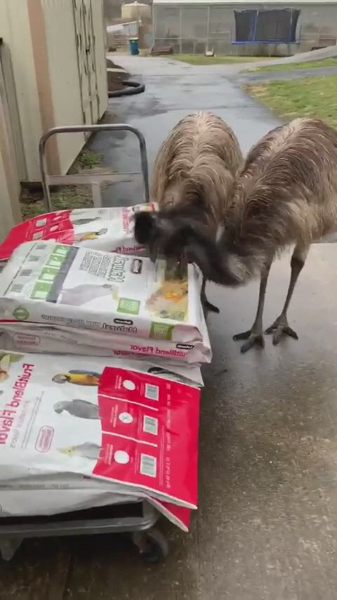 That's just a picture of food guys - Video & GIFs | funny animals,funny animal ,funny birds,funny animal jokes,cute funny animals,animal memes,funny dogs, funny,cute birds,funny talking