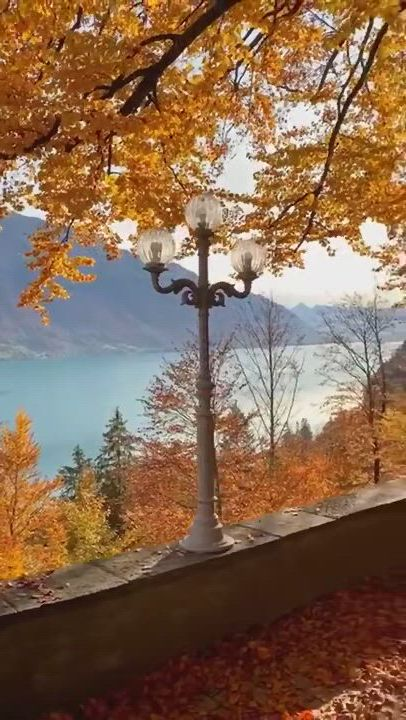 This view i mean, it has everything - Video & GIFs | beautiful nature,nature gif,beautiful rose flowers,best ever,diy home crafts,location history,places to travel,woodland,planets,in this moment