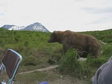 Well hello grizzly bear - Video & GIFs   grizzly bear,alaskan brown bear,brown bear,ours grizzly,grizzly bears,too close for comfort,survival,close encounters,hanging out,gone fishing