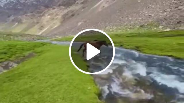Wild Horses In Afghanistan - Video & GIFs | horses, beautiful places to travel, amazing pics, wild horses, afghanistan