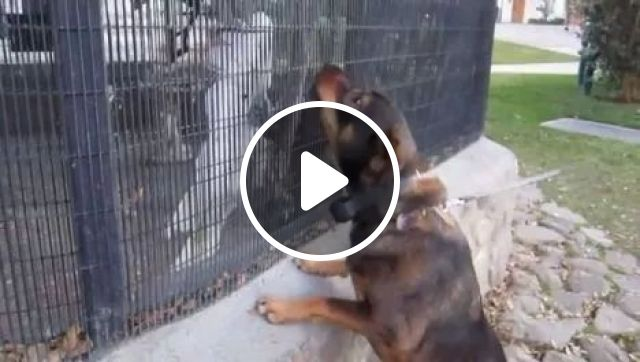 Parrot teasing dog, animals, funny parrot, dog, zoo