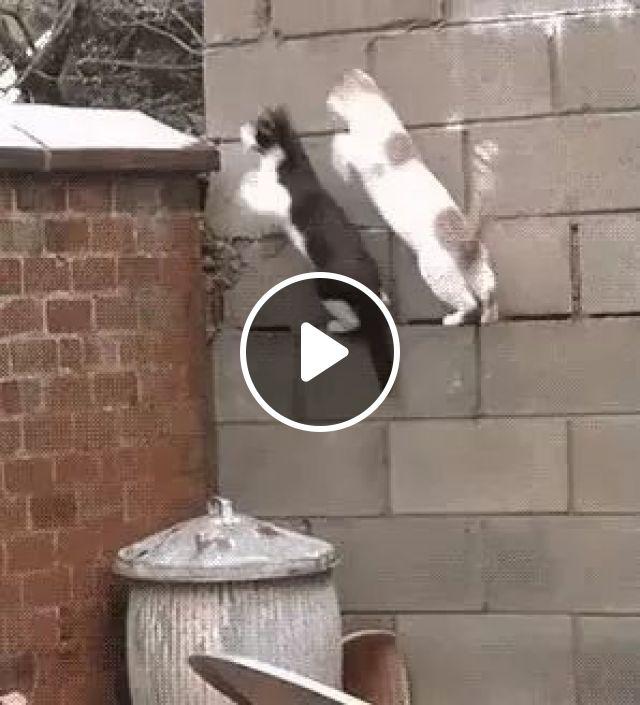 Team parkour, Animals, Cat, Team Parkour, Wall, Trash Can