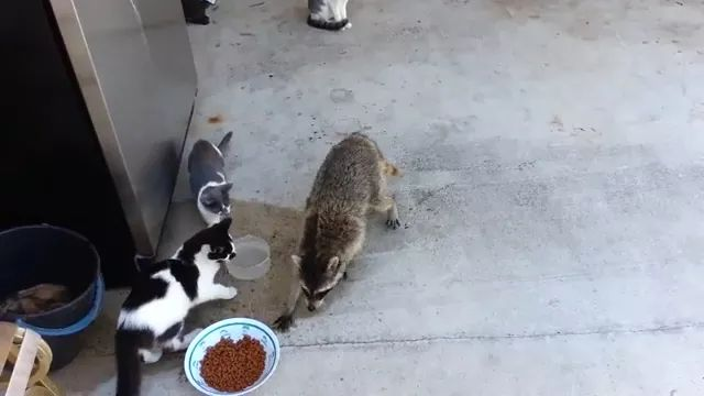Hey bro, give me some food, LOl
