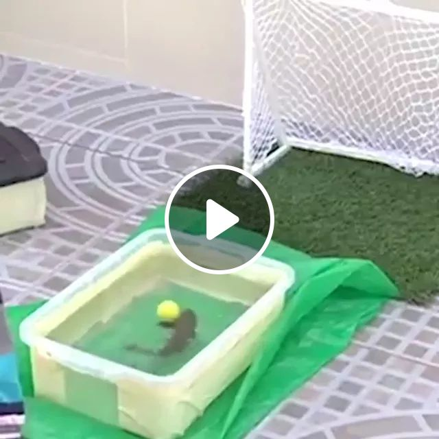 Can Your Fish Play Soccer? - Video & GIFs | Funny Fish, Soccer, Football, Ball, Goal, Plastic Storage, sport