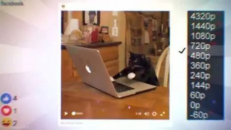 Hacker Cat, animals, Apple MacBook, Apple Laptop, Mark Zuckerberg, Hacker, Funny Cat