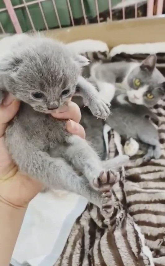 Hooman, give me back my baby