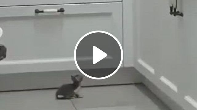 The World's Most Adorable Attempt Cat - Video & GIFs | cute kittens, cute baby cats, cute little animals, cute funny animals, funny cats, cats humor, funny horses, ragdoll kittens
