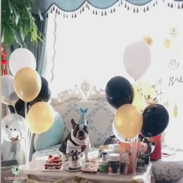 Best Look Dog Wedding Birthday Clothes