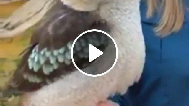 Hahah - Video & GIFs | vogel als haustiere, lustige tiere, niedliche tiere, funny birds, cute birds, pretty birds, cute funny animals, cute baby animals, nature animals, animals and pets, wild animals, beautiful creatures