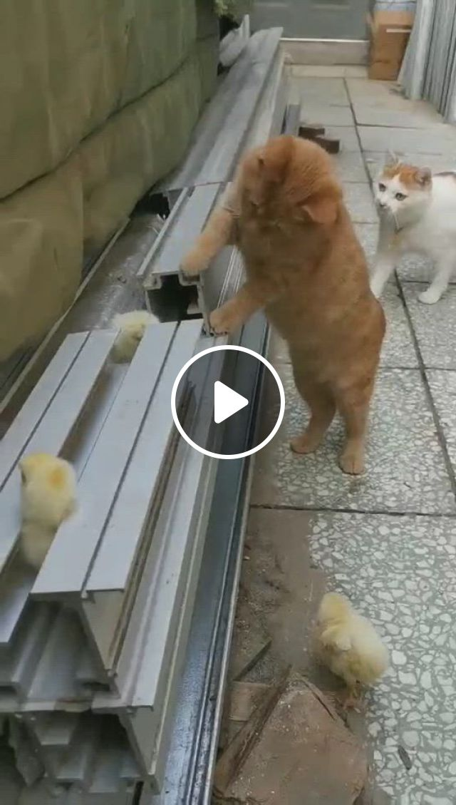Happy Time - Video & GIFs | cute baby animals, funny cute cats, funny animal , cute baby cats, cute cat gif, cute funny animals, kittens cutest, animals and pets, funny animal memes
