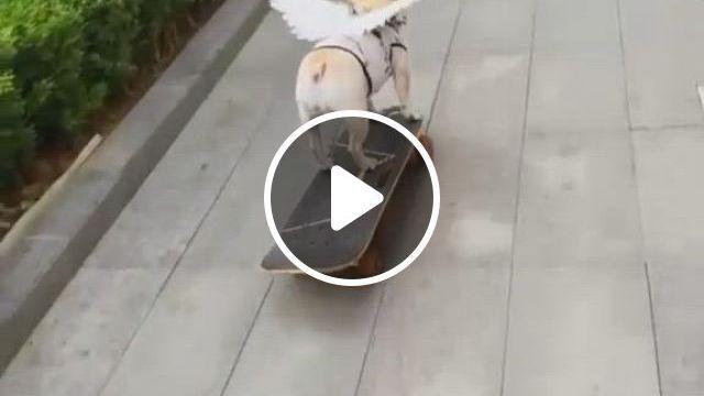 Wow Am I Talented - Video & GIFs   baby animals funny, cute animals, funny animal , funny for kids, cute funny dogs, cute funny animals, cute baby animals, funny dachshund, pug puppies, happy animals
