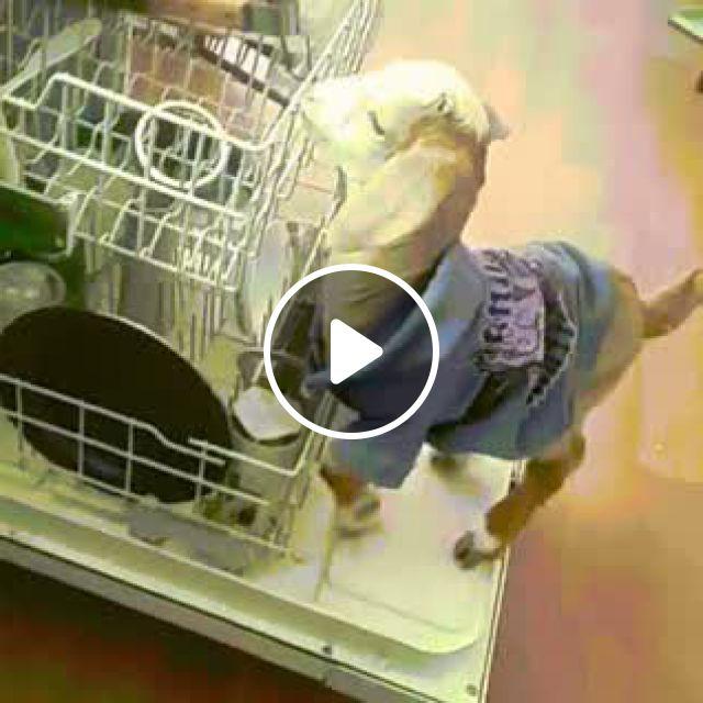 Goat In A Dishwasher - Video & GIFs   cool gifs, public domain images, fantasy creatures, vintage images, vintage designs, sock dolls, digital archives, goats, dishwasher, fine art prints, animal