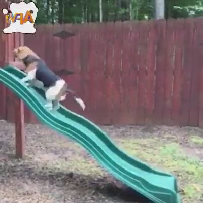 This so funny fails - Video & GIFs | funny fails,funny gifs fails,funny short ,crazy funny memes,funny gifs,wtf funny,funny jokes,fail ,like animals,just kidding,just for laughs