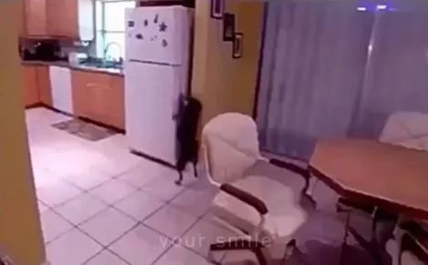 The smartest dog on the planet