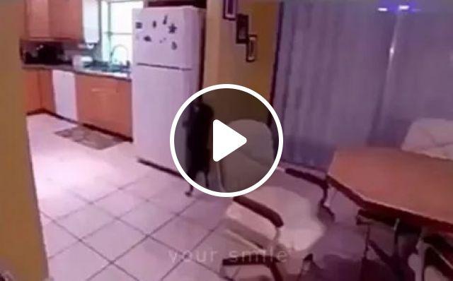 The smartest dog on the planet, animals, Kitchen, Refrigerator, Food, Funny Dog, Smart Dog, Desk Chair