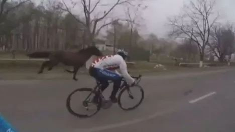 Horse join the cycling team