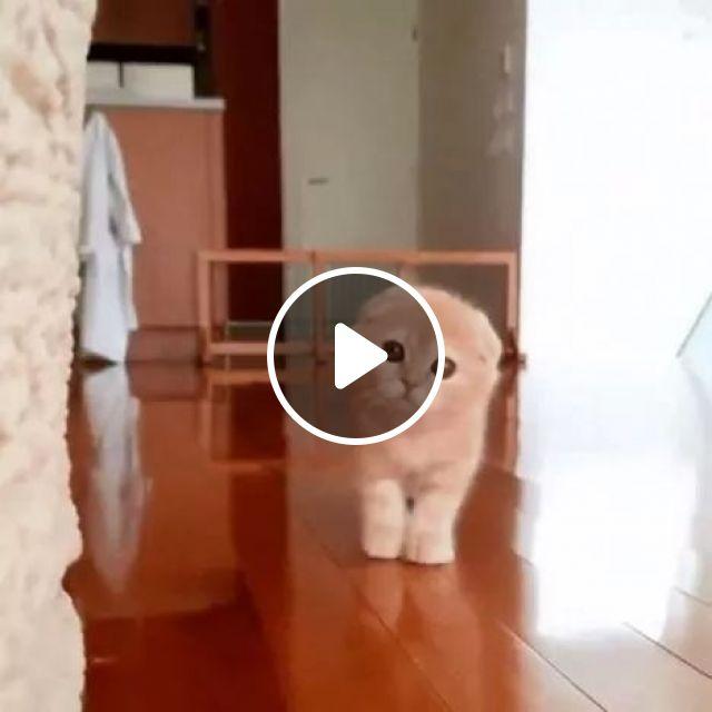 Magic Move, animals, Cute Cat, Magic, Adorable, Kitten