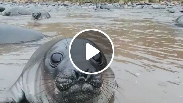 Cute Sea Lion Just Want Kiss - Video & GIFs | funny animal , cute animals, cute baby animals