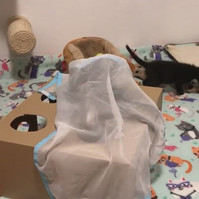 A box can entertain the kittens for days